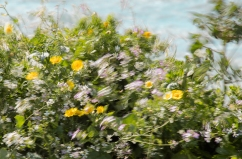 Wildflowers-in-Motion