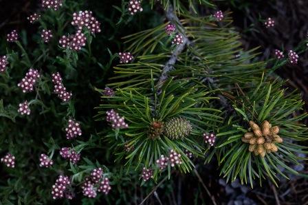 Sierra-Spring-Bouquet